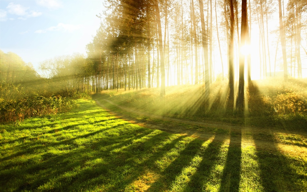 Bright Sunlight Rays Wide Desktop Background